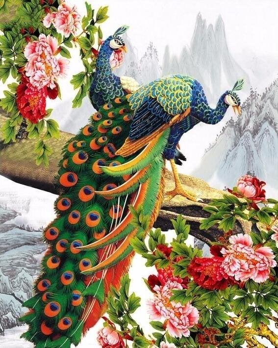 Image of 2 påfugle på gren