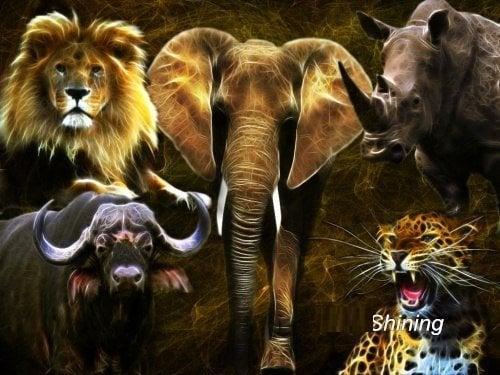 Image of 5 savannedyr