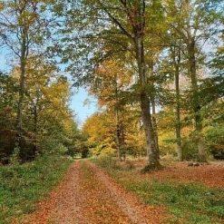 Efterårsskov - Diamond Paint
