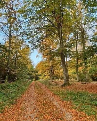 Image of Efterårsskov