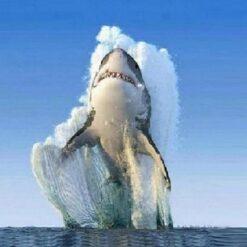 Haj i vand - Diamond Paint