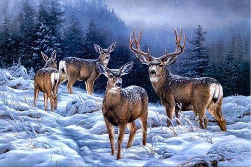 Hjorte i sne