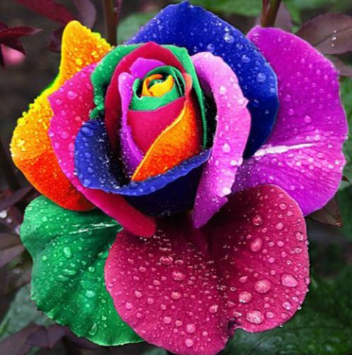 Diamond Painting - Flerfarvet rose thumbnail