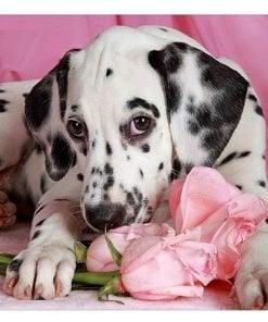Dalmatiner på roser