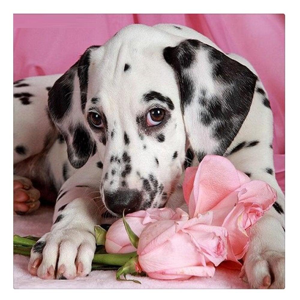 Image of Dalmatiner på roser