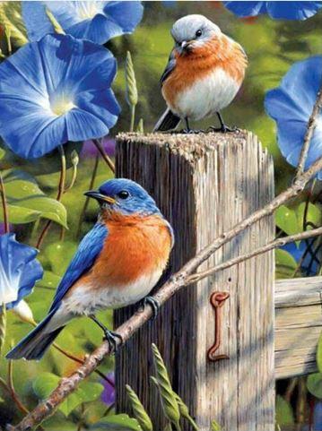 Image of 2 fugle med blå blomster