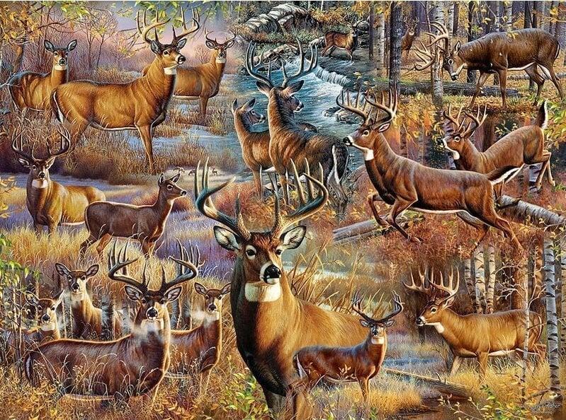 Mange hjorte thumbnail