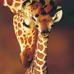 2 giraffer - Diamond Paint