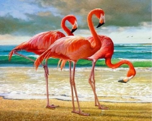 Image of   3 flamingoer