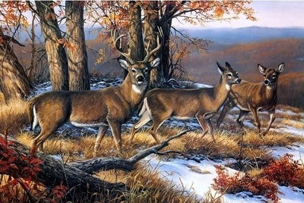 Image of 3 hjorte i skoven