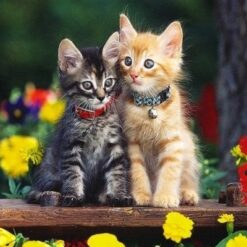 2 kattekillinger - Diamond Paint