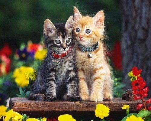 Image of 2 kattekillinger