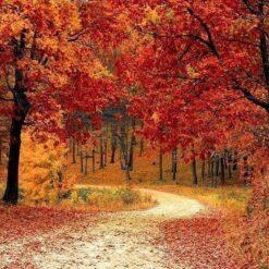 Efterår i skoven - Diamond Paint