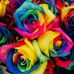 Farverige roser - Diamond Paint