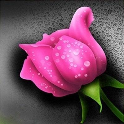 Pink rose thumbnail
