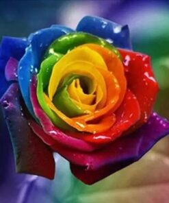 Rose i mange farver - Diamond Paint