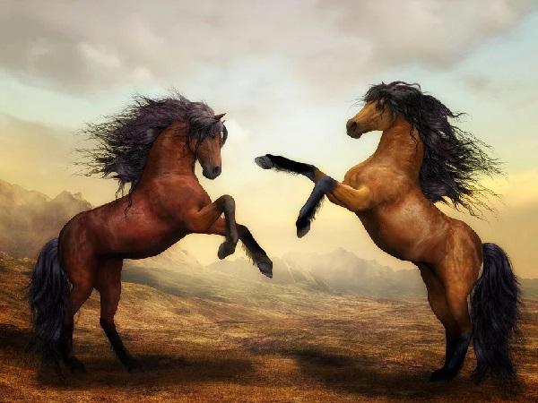 2 brune heste thumbnail