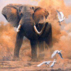 Elefant på savannen