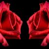 2 røde roser i diamond paint