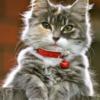 Kat med rødt halsbånd i diamond paint