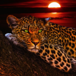 Leopard ved solnedgang i diamond paint