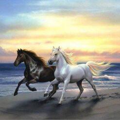 Sort og hvid hest på strand i diamond paint