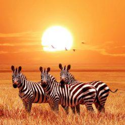 3 zebraer ved solnedgang - diamond paint