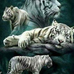 Flot hvid tiger i diamond paint