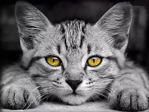 Sort-hvid kat med gule øjne i diamond paint